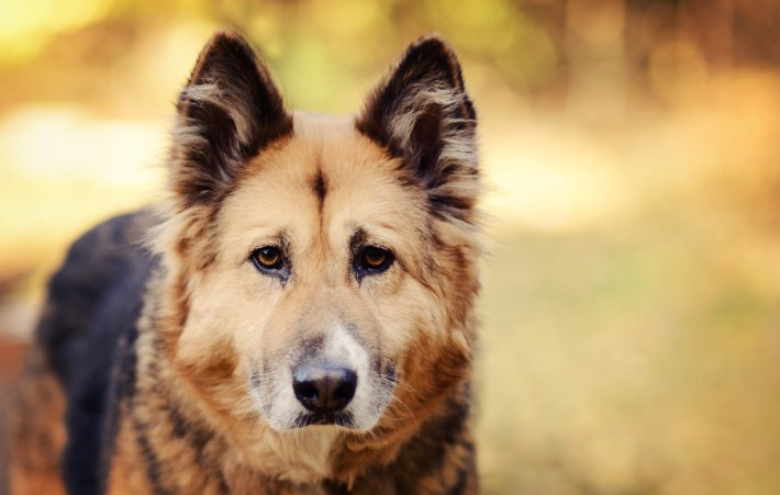 Rüyada Köpek Bağlamak
