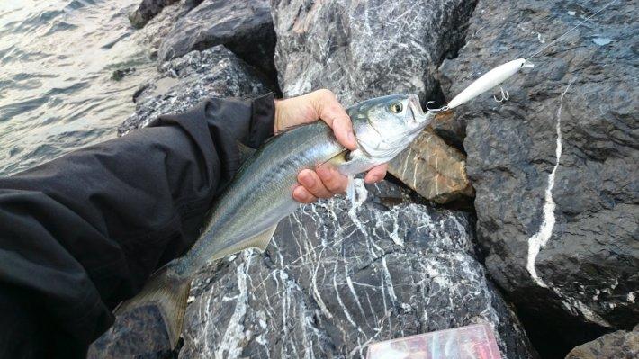 balık-avlamak