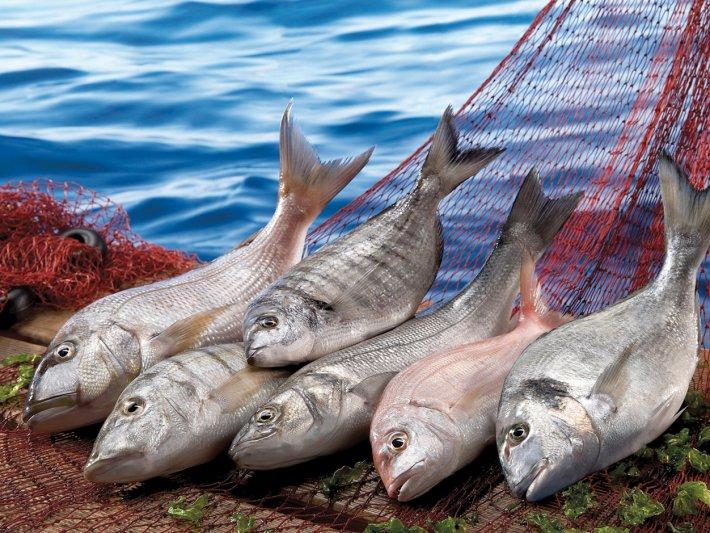 rüyada balık görmek ne demektir
