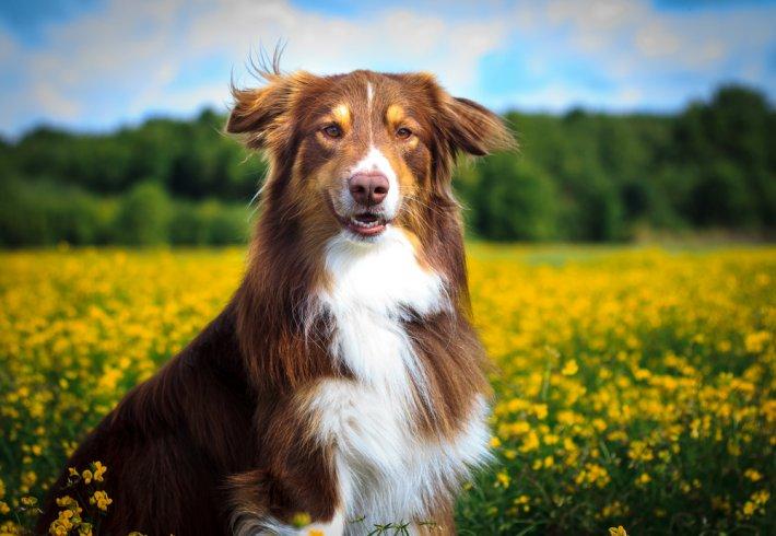 Köpek Rüyada Görmek