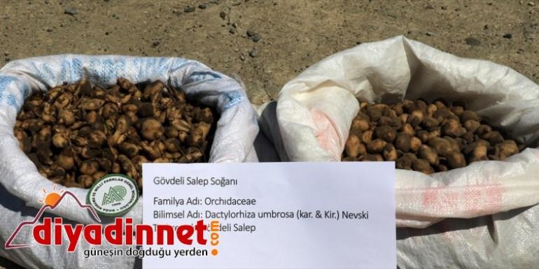 Kaçak salep soğanı toplayan kişiye 60 bin 163 lira ceza